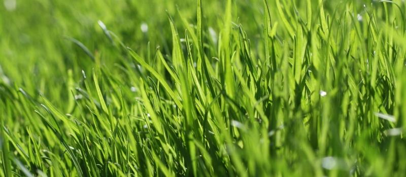 grass-666284_1280