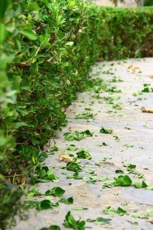 Yard Waste Cluttering Sidewalk