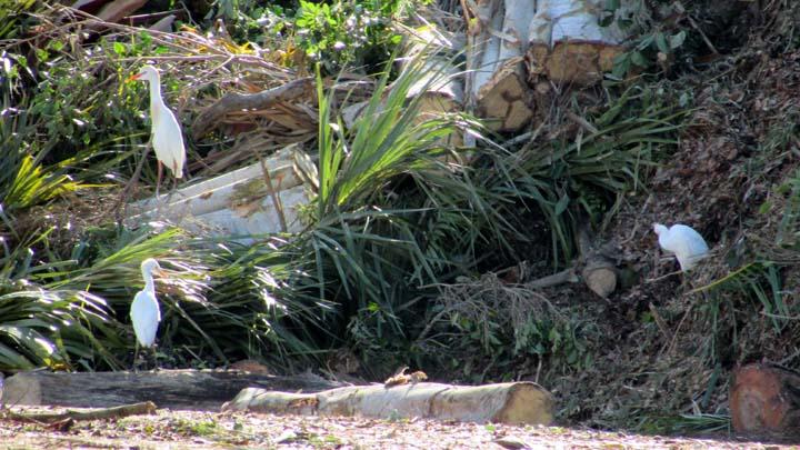 Yard Waste and Birds