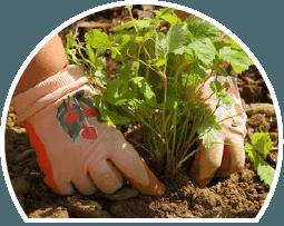 landscape supplies in use, garden supplies, soil, garden